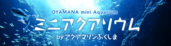 oyamanaaqua